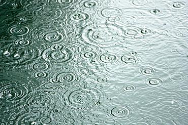Rain drops on the sea in Southeast Alaska, USA. Pacific Ocean.