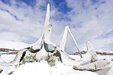 Snow-covered whale bones on Jougla Point, in Port Lockroy at the western end of Wiencke Island, Antarctica, Southern Ocean