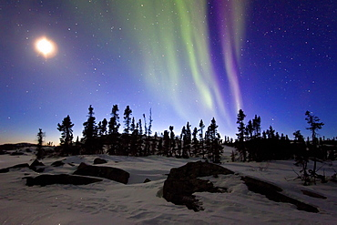 Aurora Borealis (Northern (Polar) Lights) and waxing moon over the boreal forest outside Yellowknife, Northwest Territories, Canada