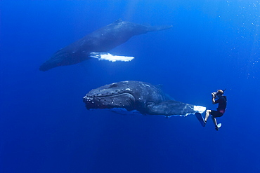 wildlife photographer James D. Watt photographing humpback whales, Megaptera novaeangliae, on migratory route, Pacific Ocean, MR 030304-JW