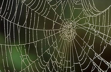 cobwebs aviemore, inverness-shire, , scotland.