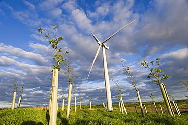Wind turbine with planted hardwood trees, Blacklaw Windfarm, South Lanarkshire, Scotland