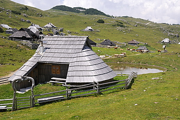 Traditional wooden herdsmen's huts with pine shingle roofs and Cattle (Bos taurus) standing near pond on 1600m high pastureland at Velika Planina plateau, Kamnik-Savinja Alps, Slovenia.
