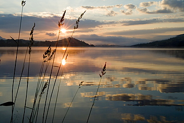Loch Awe sunrise with long grass in foreground.  Argyll, Scotland