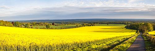 Rape field, Guildford, Surrey, England, United Kingdom, Europe