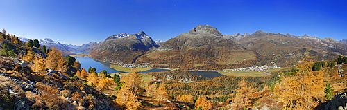 Panorama with larches in autumn colours and Piz da la Margna, lake Silser See, lake Silvaplaner See, Piz Lagrev, lake Champfer See, Piz Julier and Piz Nair, Oberengadin, Engadin, Grisons, Switzerland