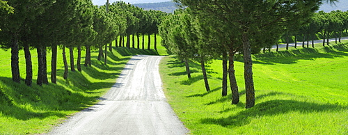 Panorama of alley of pine trees, Val d¥Orcia, UNESCO World Heritage Site Val d¥Orcia, Tuscany, Italy