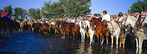 Pilgrims on horseback standing in the river, Andalusia, Spain
