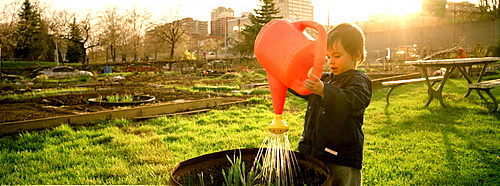 Toddler playing at a Municipal Community Gardens with a Watering Can, Montreal, Quebec