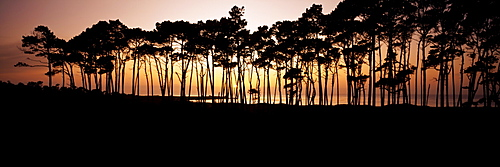 California, View of Spanish Bay from Seventeen mile drive, Line of trees on shoreline silhouetted at sunset.