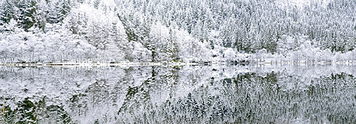 Reflections on Loch Chon in winter, Aberfoyle, Stirling, The Trossachs, Scotland, United Kingdom, Europe