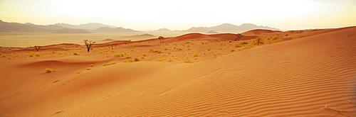 Sand dunes/dune sea at sunset, Namib Rand Game Reserve, Namib Naukluft Park, Namibia