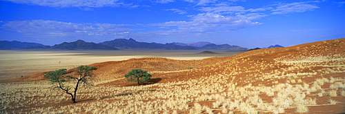Panoramic view of trees and mountains in desert landscape, Namib Rand game reserve, Namib Naukluft Park, Namibia, Africa
