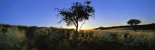 Trees in silhouette, Namib Rand, Namib Desert, Namibia, Africa
