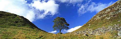 Sycamore Gap, Hadrian's Wall, near Hexham, Northumberland, England, United Kingdom, Europe