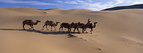 Camel train, Khongryn dunes, Gobi desert, Gobi National Park, Omnogov Province, Mongolia, Central Asia, Asia