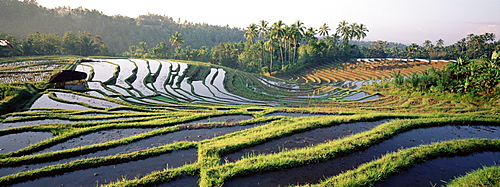 Agricultural landscape of rice fields and terraces, central area, island of Bali, Indonesia, Southeast Asia, Asia