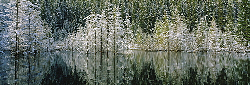 Reflected snow covered trees Canmore Alberta Canada