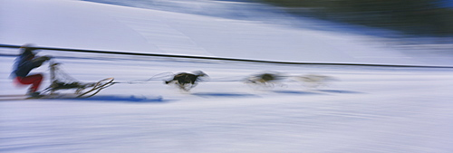 Dog sledding Canmore Alberta Canada