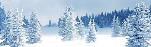 Fresh Snow on Pine Trees, aos County, New Mexico, USA