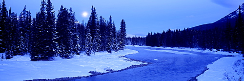 Moon rising above the forest, Banff National Park, Alberta, Canada