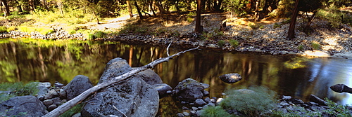 Bare tree lying on stones, Merced River, Californian Sierra Nevada, California, USA