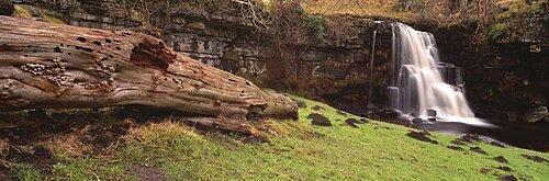 Bare tree lying on grass, East gill falls, Ingleton, North Yorkshire, England
