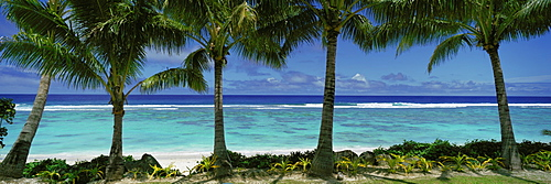 Palm trees on the beach, Cook Islands, French Polynesia