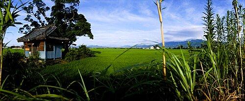 Rice paddies in a field, Saga Prefecture, Kyushu, Japan