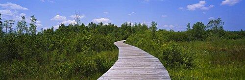 Boardwalk in the forest, Okefenokee National Wildlife Refuge, Georgia, USA
