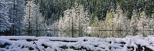 Reflection of trees on water, Beaver Pond, Canmore, Alberta, Canada