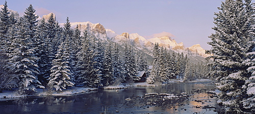 Trees covered with snow, Policeman's Creek, Canmore, Alberta, Canada
