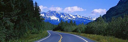 Plants on both sides of a road, Glacier Road, Kenai Mountains, Kenai Peninsula, Seward, Alaska, USA
