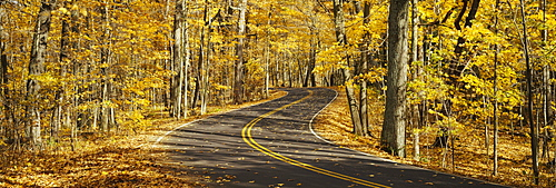 Empty road passing through a forest, Parnell, Wisconsin, USA