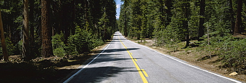 Trees on both sides of a road, Yosemite National Park, California, USA