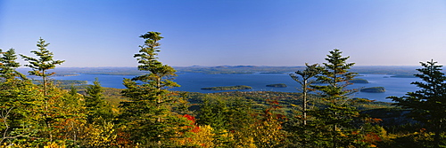 Trees in a forest, Frenchman Bay, Acadia National Park, Maine, USA
