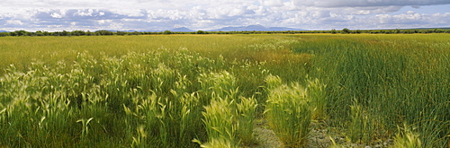 Panoramic view of a field, Crook County, Oregon, USA