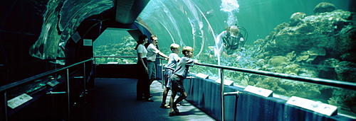 Australia, Townsville, Underwaterworld, Side profile of a family watching a scuba diver in an aquarium