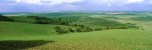 High angle view of a wheat field, Palouse Region, Whitman County, Washington State, USA
