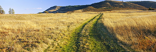 Tire tracks on a field, Columbia River Gorge National Scenic Area, Oregon, USA