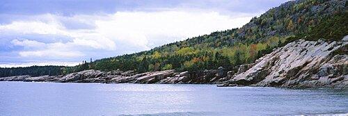 Trees on an island, Sand Beach, Acadia National Park, Acadia, Maine, USA