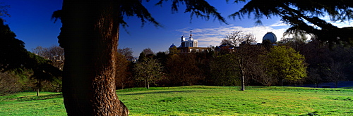 Trees In A Park, Royal Observatory, Greenwich, England, United Kingdom