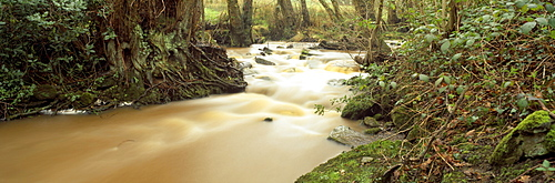 Stream Flowing Through A Forest, Eskdale Stream, Lake District National Park, Cumbria, England, United Kingdom