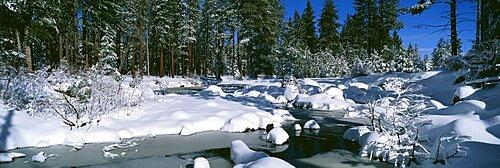 Snow along a river, Alpine River, Yosemite National Park, California, USA