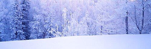 Winter Scenic AK