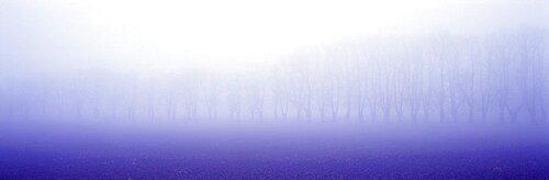 Trees Fog Uppland Sweden