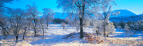 Trossachs National Park Scotland UK
