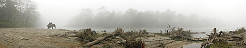 Mahout and elephant in early morning mist, Island Jungle Resort Hotel, Royal Chitwan National Park, on the Gangetic plains of the Terai, Nepal, Asia