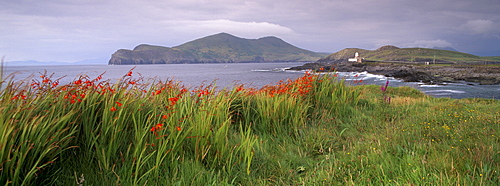 Doulus Bay and Doulus Head, Valentia island, Ring of Kerry, Munster, Republic of Ireland, Europe