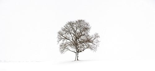 Tree in wintry landscape, Oberegg, Unterallgaeu district, Bavaria, Germany, Europe